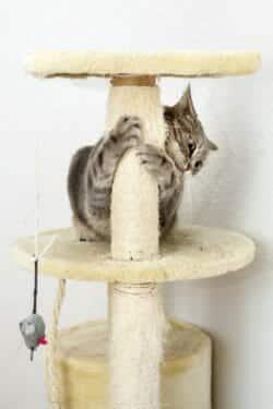 Cat on a cat tree