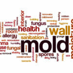 Mold in a house