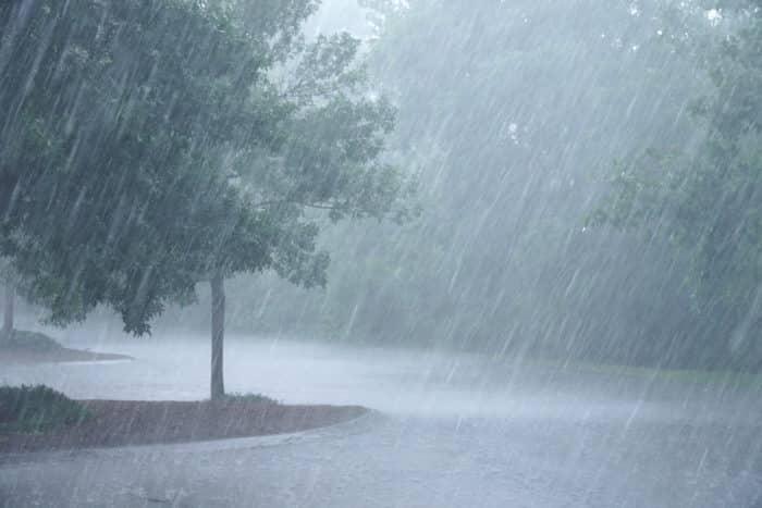 Tree with heavy rain
