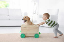 Child pushing cart with dog in it