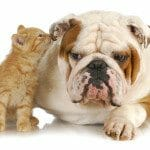 Selling a house with pets and lawsuits