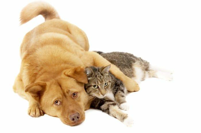 Pet - dog and cat