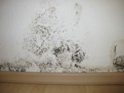 Mold on a home wall