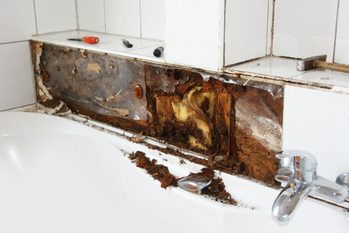 Mold in kitchen and bathroom