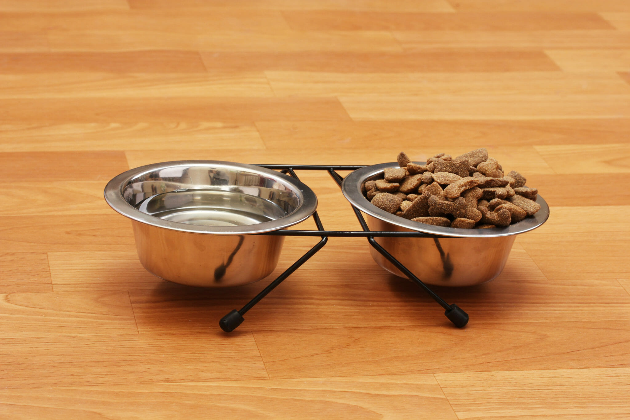 Dog water and feed bowl