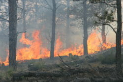 Fire, Wildfire areas