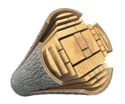 Lumber from log