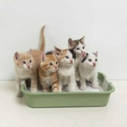 Cats in litter box