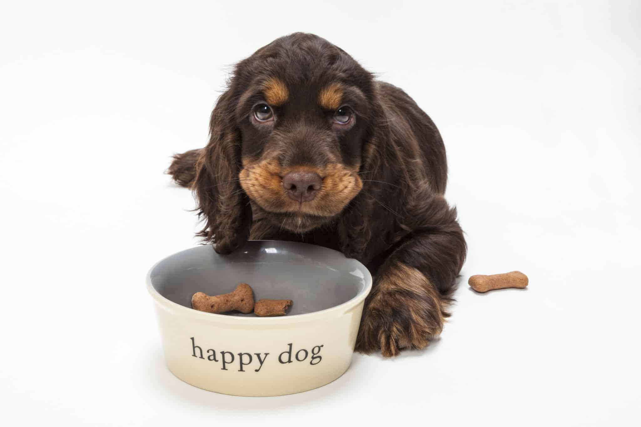 Dog at bowl