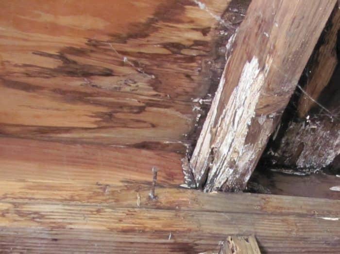Mold on wood
