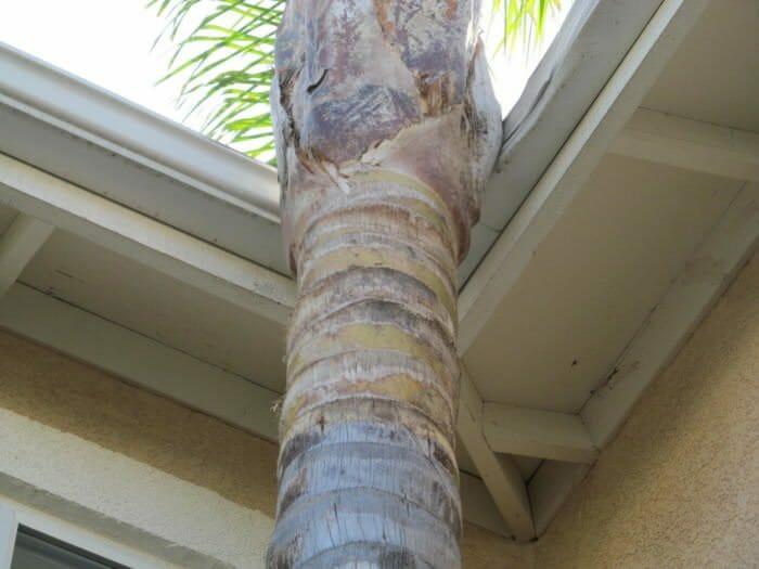 Tree rubbing gutter