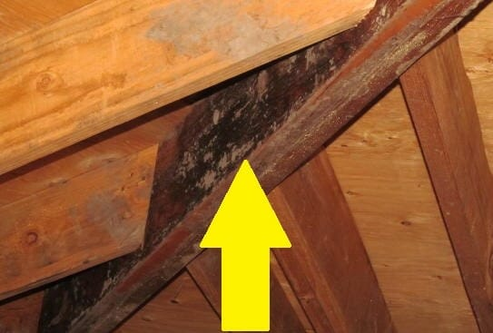 Is Lumberyard Mold In A Home Serious Buyers Ask