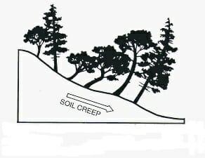 Slope creep with leaning trees dog legged shape