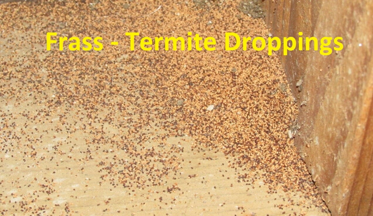 Frass - termite droppings