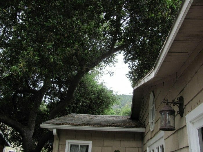 Tree Branches Hanging Over The Roof Buyers Ask
