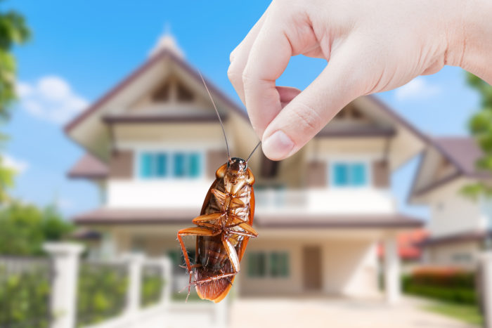 Pest inspections when buying a home