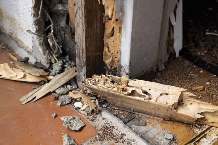 termite damage in door frame